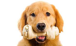 Bones-for-Dogs.jpg