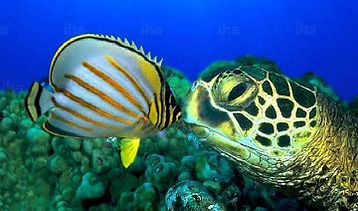 Can-you-put-turtles-and-fish-in-the-same