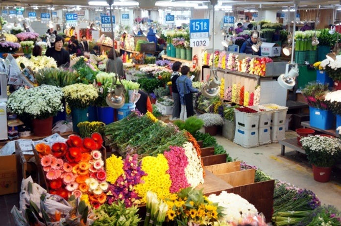 Express Bus Terminal Wholesale Flower Market & getting there | Seoul, South Korea