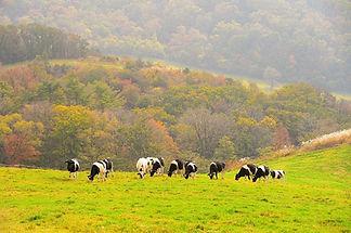 Daegwallyeong Sky Ranch