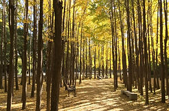 TOP Autumn Foliage Places in/outside Seoul - Seoul Forest | KoreaToDo