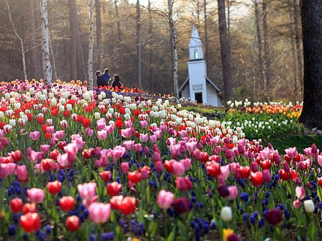 The Garden of Morning Calm - Spring 2.jpThe Garden of Morning Calm Spring Festival