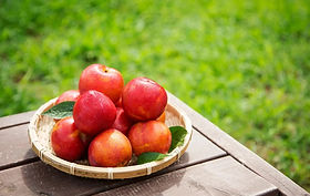 Jul-Sep: Fruit Farm