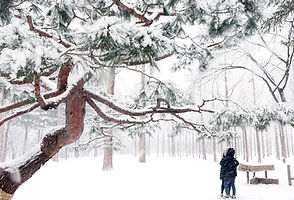 TOP Winter Places to Visit in & out Seoul - Winter Wonder Nami Island | KoreaToDo