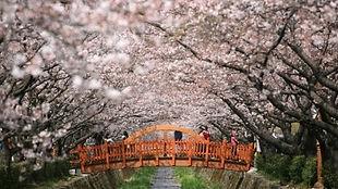 Jinhae Cherry Blossom Festival Day Tour