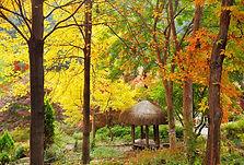 Nami Island, Petite France & The Garden of Morning Calm Day Tour