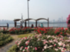Ttukseom Hangang Park - Rose Garden & Getting There   Seoul, South Korea