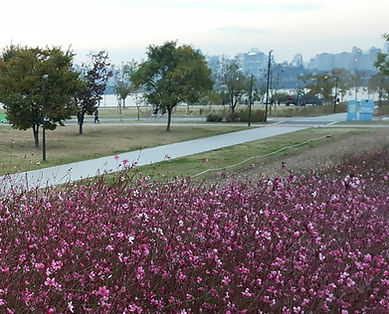 Yeouido Hangang Park & Getting There | Seoul, South Korea