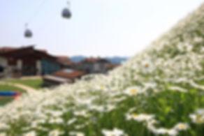 High1 Resort - In Spring   KoreaToDo