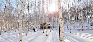 Birch Tree Forest, Chuncheon Myeongdong & Sky Walk Day Tour