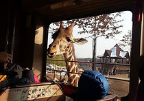 Recommended Day Tours from Seoul - Everland | KoreaToDo