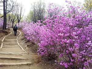 Top Favourite Hiking/Walking Trails