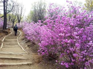 Cheonggyesan (Mountain)