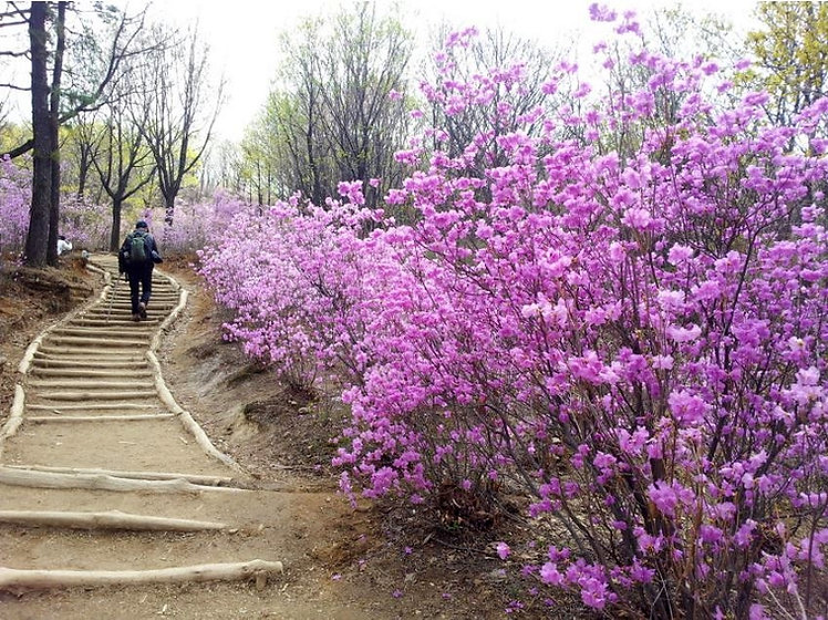 Hiking Cheonggyesan (Mountain) & Getting There | Seoul, South Korea