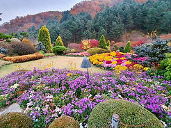 TOP Autumn Foliage Places in/outside Seoul - The Garden of Morning Calm | KoreaToDo