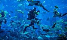 Busan SEA LIFE Aquarium Admission Ticket
