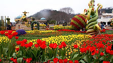 Everland 1 Day Ticket (QR Code Direct Entry)