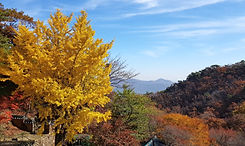 TOP Autumn Foliage Places in/outside Seoul - Gwanaksan Mountain | KoreaToDo