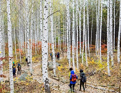 Wondaeri Birch Tree Forest, Alpaca & Chuncheon Myeongdong Day Tour