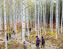 TOP Autumn Foliage Places in/outside Seoul - Wondaeri Birch Forest | KoreaToDo