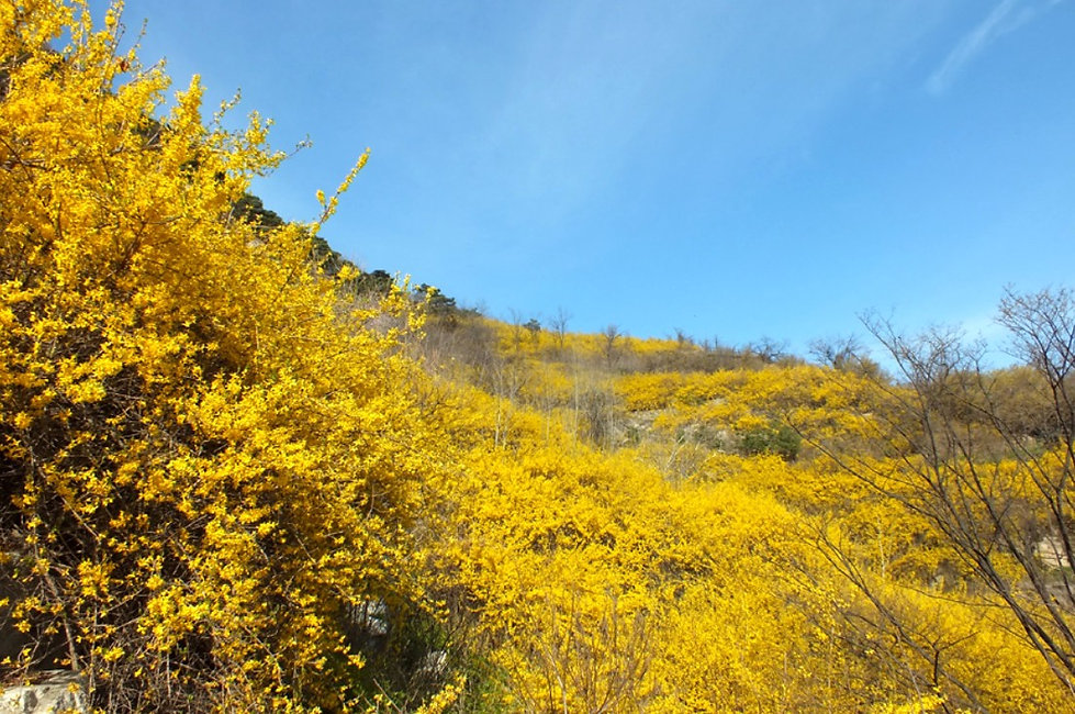 Top Places for Cherry Blossoms & Spring Flowers in Seoul - Inwangsan Mountain | KoreaToDo