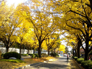 Road leading to Blue House (Cheong Wa Dae)