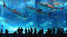 Coex Aquarium in Seoul Admission Ticket