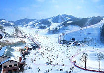 Recommended Day Tours from Seoul - Oak Valley Ski Day Tour | KoreaToDo