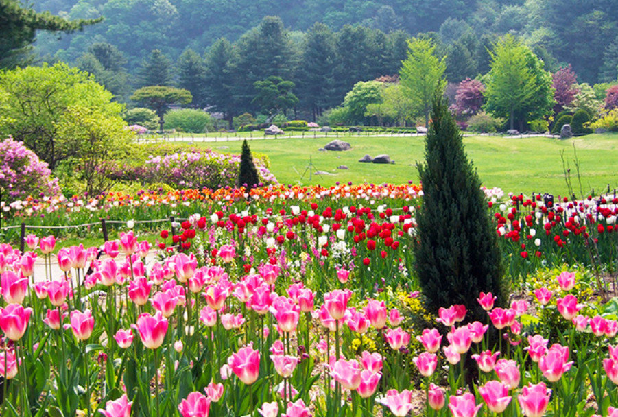 Top Places for Cherry Blossoms & Spring Flowers from Seoul - The Garden of Morning Calm Spring Festival | KoreaToDo