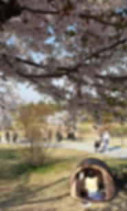 Yeouido Hangang Park - Cherry Blossoms | KoreaToDo