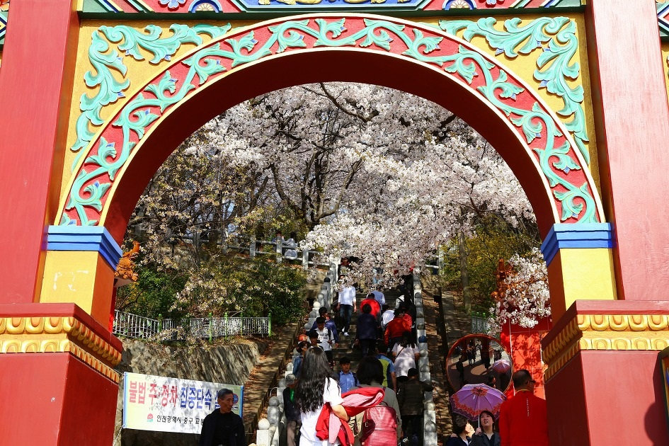 Top Places for Cherry Blossoms & Spring Flowers from Seoul - Jayu Park @ Incheon Chinatown | KoreaToDo