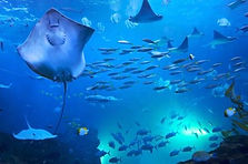 Busan SEA LIFE Aquarium Admission Ticket
