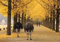 Recommended Day Tours from Seoul - Nami Island   KoreaToDo