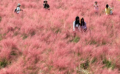 TOP Autumn Foliage Places in/outside Seoul - Yangju Nari Park | KoreaToDo