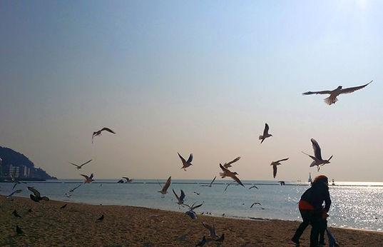 Haeundae Beach 3.jpg
