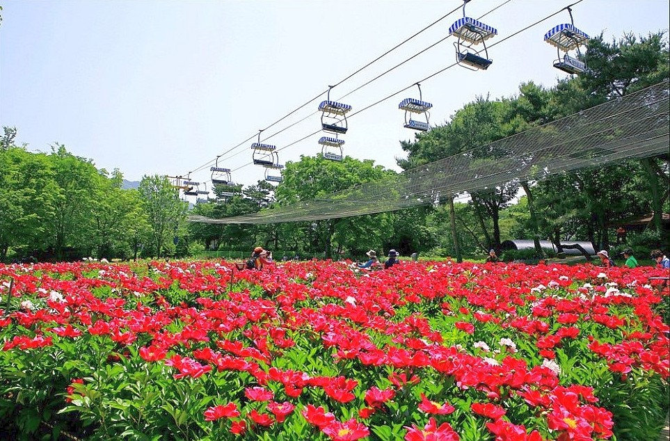 Top Places for Cherry Blossoms & Spring Flowers in Seoul - Seoul Grand Park Rose Garden Festival | KoreaToDo