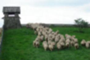 How to go to Daegwallyeong Sheep Farm | Pyeongchang, South Korea