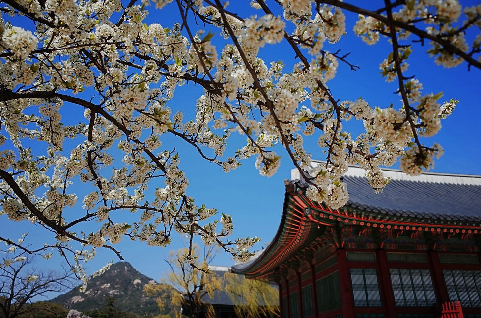Top Places for Cherry Blossoms & Spring Flowers in Seoul - Gyeongbokgung Palace | KoreaToDo
