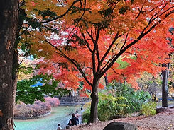 TOP Autumn Foliage Places in/outside Seoul - Deoksugung Palace | KoreaToDo