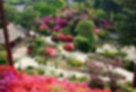 Korea Shuttle Bus Services for Foreigners ONLY - The Garden of Morning Calm | KoreaToDo