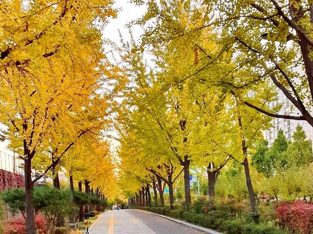 Olympic Park - Ginkgo Tree Road