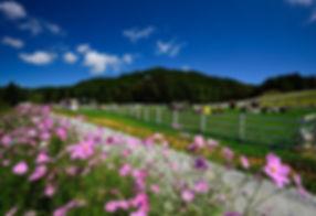 How to get to Daegwallyeong Sky Ranch | Pyeongchang, South Korea