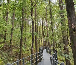 Ansan Jarak-gil Trail