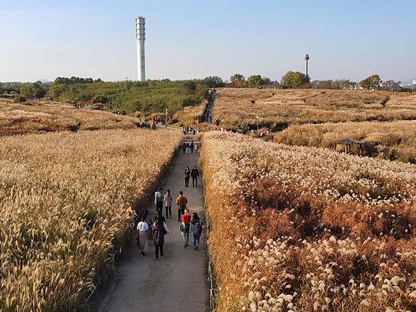 Seoul Silver Grass Festival 2021 @ Haneul Park