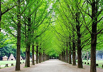 Recommended Day Tours from Seoul - Nami Island | KoreaToDo