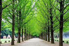 Nami Island Round Trip Transfer & Admission Ticket