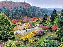 Nami Island & The Garden of Morning Calm Day Tour
