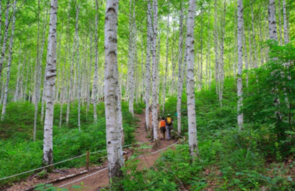 Wondaeri Birch Forest & getting there   Seoul, South Korea