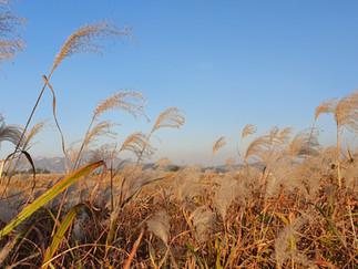 Haneul Park - Pampas Grass