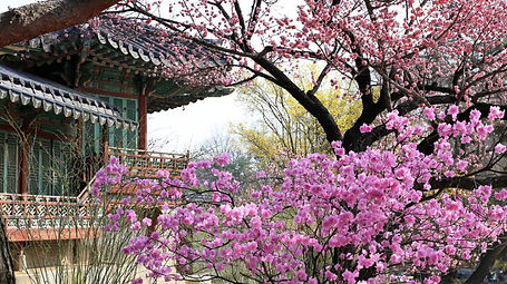 Changdeokgung Palace & Secret Garden - Cherry Blossom in Spring & Getting There | Seoul, South Korea